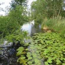 La Frette, cours d'eau traversant les Marais de Sacy