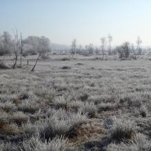 Les Marais de Sacy en hiver