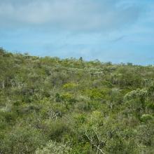 Fourrée xérophytes à Euphorbia
