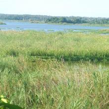 Ecosystème marécageuse sur les berges du lac Ambondrobe