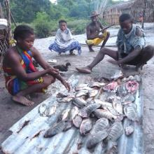 Ressources en poisson d'eau douce du lac Ambondrobe