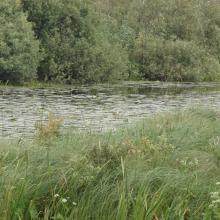 Fen mires overgown with shrubs and combined with oxbow lakes in the floodplain of the Iput River