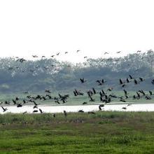 Fuhe River eocosystem