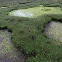 Wetland landscape of permanent freshwater marshes