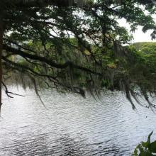 Madre Vieja Videles Ramsar Laguna de Sonso