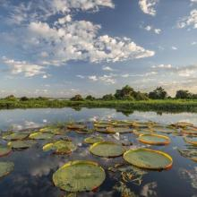 Parque Nacional del Pantanal Matogrosense