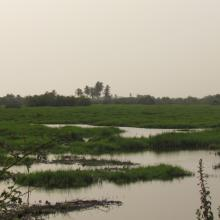 Plaine inondable de la riviere So dans la Commune de So-Ava. Site d'accueil des oiseaux d'eau migrateurs
