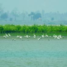 Birds and mangroves of Nanthar Island