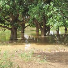 Photo 2 : Forêt classée compris dans les limites du site Ramsar