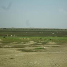 Photo 2 : Vue panoramique du paysage dans le bassin versant de la mare d'Oursi
