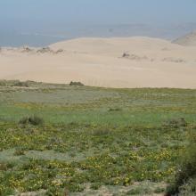 Dunes vives au nord de Tamri