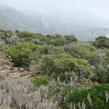 Arganeraie et végétation macaronésienne à Euphorbes