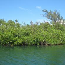 Mullet Pond
