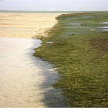 Les bancs et chenaux en basse marée