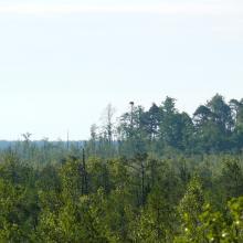 Cheremske Bog with Osprey nest