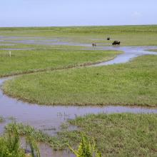 The mudflat in the site