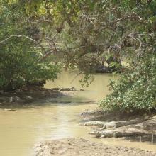Photo 9 : Gros plan sur la richesse culturelle des communautés riveraines du site