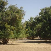 Photo 6 : îlots de végétation arborée dans le site Ramsar