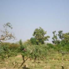 Photo 3 : îlot de végétation clairsemée dans le site Ramsar