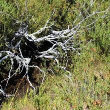 Peat flow