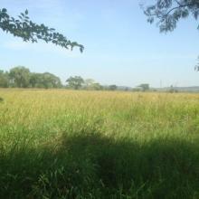 Photo 2 : Vue panoramique d'une rizière dans les limites du site