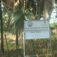 Pépinière villageoise aménagée par le MCA au profit des communautés riveraines pour le reboisement et la récupération des berges