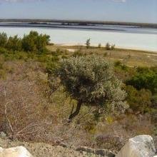 View west across Lac Tsimanamsotsa from escarpment.