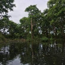 Seasonally flooded freshwater swamp forest in Stung Sen Ramsar Site