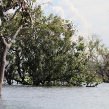 Seasonally flooded freshwater swamp forest in Stung Sen Ramsar Site during raining season