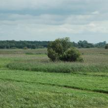 Narew River Valley near Bokiny Village