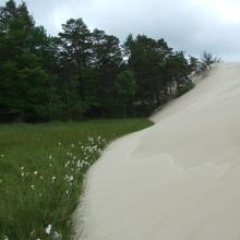 Peatbog buried by dune