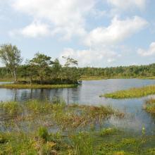 Peatland regenerating after peat extraction