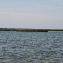 Bulrush in Gardno Lake