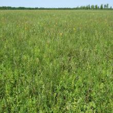 Ławki Marsh