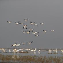 Overwintering water birds