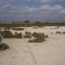 El Hondo. Saladar de La Reserva