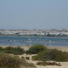 Lagunas de La Mata y Torrevieja. Flamencos en la laguna de La Mata