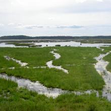Marshes in Asköviken-Tidö nature reserve