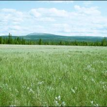 Large and wide sedge field in the south east part of the site