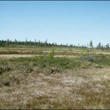 Large areas with well-developed string mixed mires in the north west part of the site.