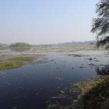 Panoramic view of Nawabganj wetland.