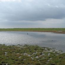 The intertidal marshes