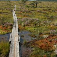 Trail for visitors through open raised bog area