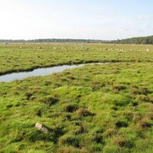 The northern sub site. A small ditch is crossing the wetland.