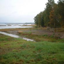 Lake Persöfjärden - Shore meadow and reed beds.