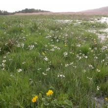 Wet meadows, Nordre älvs estuarium