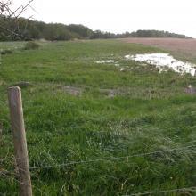 Wet meadows, Nordre älvs estuarium