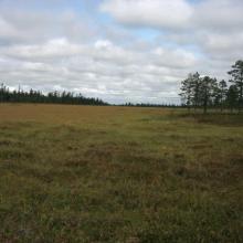 Peatland close to the  Blomtäkt area.