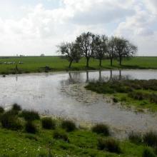 Types de milieux : mare et prairie (PNRFO)