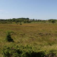 The mire at sub-site Storamyr.